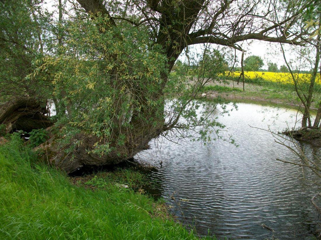 Teich Mandelshagen